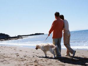 愛犬と浜辺の散歩