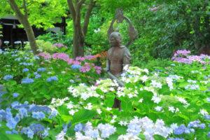 鎌倉「長谷寺 のアジサイ」アジサイに佇む仏像