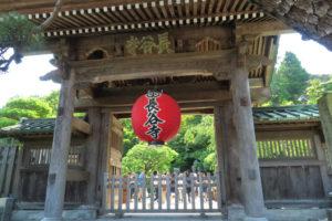 鎌倉「長谷寺 のアジサイ」山門