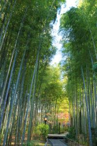 修善寺「竹林の小径」紅葉の小径