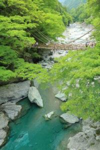 四国周遊「祖谷のかずら橋」橋の遠景