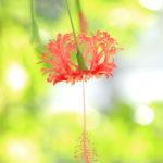 クローズアップ写真「ボケ効果美しい花光景」一輪の花光景