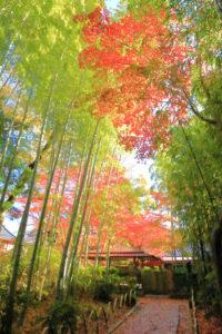 修善寺「竹林の小径」鮮やかな紅葉の世界