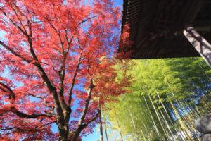 修善寺「修禅寺」鐘楼堂脇の紅葉と竹林風景