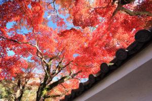 修善寺「修禅寺」寺院脇の紅葉光景
